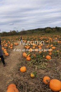 stellerstory-pumpkinpatch